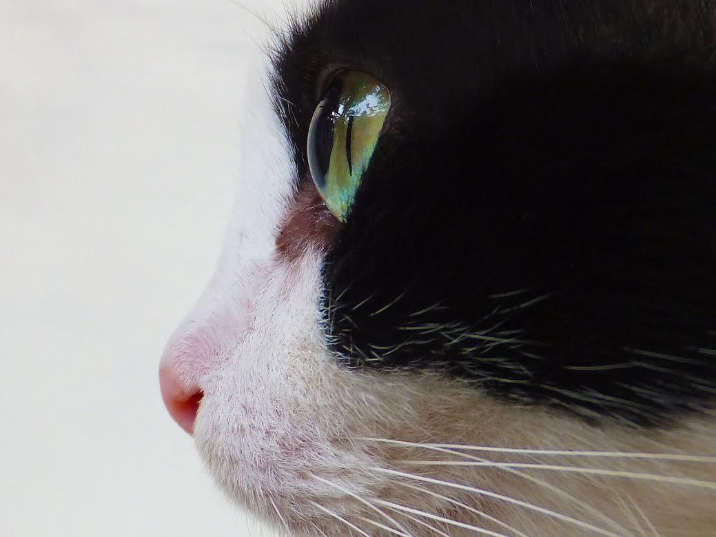 7-motivos-porque-os-gatos-fazem-bem-a-saude
