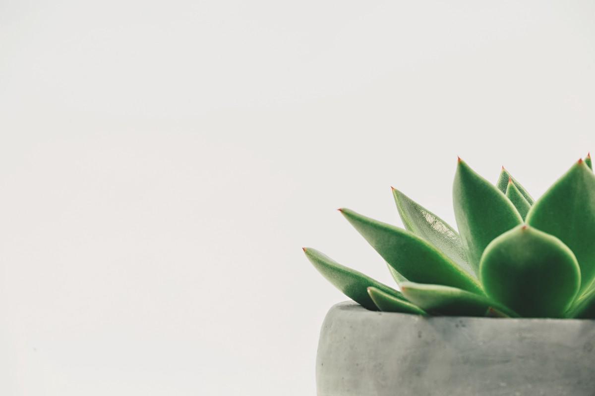 o-que-o-minimalismo-significa-para-mim